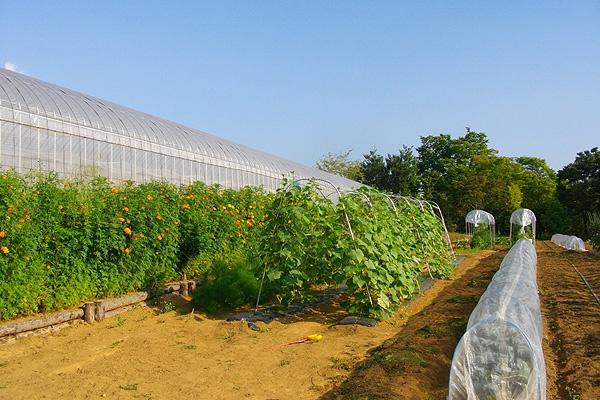 菅原文太さんの農園と契約しています。
